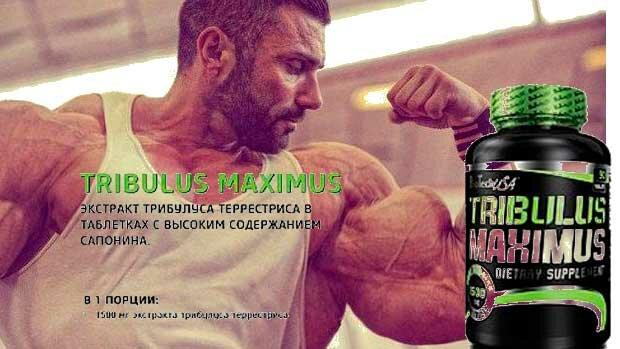 купить и заказать Tribulus Maximus BioTech в Киеве и Украине